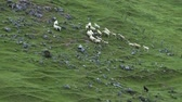 ponte : Sheep Dog in New Zealand