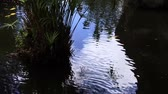 salgueiro : Water reflection pond Stock Footage