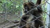 memeli : Spider Monkeys in a cage