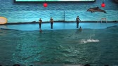 sıçramalarına : Dolphin Show in China Stok Video