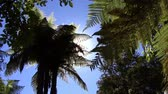 wyspa : Palm Trees in the sun Wideo