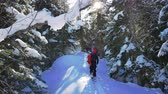 Mens are skitouring in deep snow forest