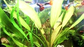 waterplant : Beautiful planted freshwater aquarium with many different fishes. Stock Footage