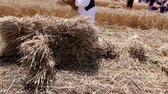 haymaking : Farmers reaping wheat in the traditional rural way, agriculture