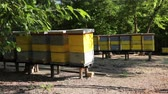 Wooden colorful beehives in a row are placed on wooden construction lifted off the ground. Wideo