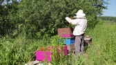 werkkleding : Beekeeper is taking out the honeycomb on wooden frame to control situation in bee colony. Stockvideo