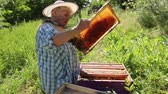 werkkleding : Senior beekeepers are taking out the honeycomb on wooden frame to control situation in bee colony.