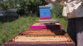 werkkleding : Beekeeper is looking swarm activity over honeycomb on wooden frame, control situation in bee colony. Stockvideo