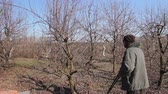 jardinier : Farmer is pruning branches of fruit trees in orchard using long loppers at early springtime. Photo - JPEG video codec