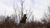 afiada : Farmer is pruning branches of fruit trees in orchard using loppers at early springtime day using ladders