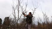 buda : Farmer is pruning branches of fruit trees in orchard using loppers at early springtime day using ladders