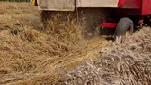 tracteur : Combine harvester harvest ripe wheat. Agricultural combine is cutting and harvesting wheat on farm fields. Photo Vidéos Libres De Droits