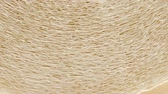 poroso : Roll of paper kitchen towels texture
