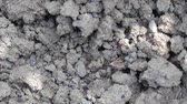 yeraltı : The mass of ants drag white worm under the ground Stok Video