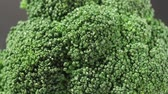 comestível : Green fresh broccoli in a closeup view as clean liquid water sprays over the vegetable