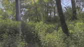 saturado : View through the branches of trees and view on the piece of water. Stock Footage