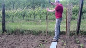 ugró : Man hammering into stake. Building of stakes for tomatoes. Gardening concept