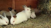 encanto : A group of young rabbits in the hutch