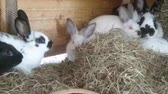 сарай : Rabbits in rabbit hutch