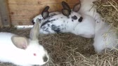 Rabbits in rabbit hutch