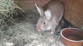 Cute Rabbit in the hutch Wideo