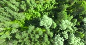 springtime : 4K - Top view on the Forest. Aerial view