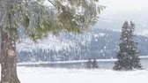 страна чудес : winter landscape  snowing on fir trees Стоковые видеозаписи