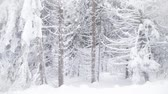 harikalar diyarı : Snowing on fir trees. Winter wonderland resort Stok Video