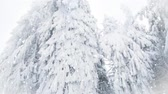 zúzmara : Snowing on fir trees. Winter wonderland resort Stock mozgókép