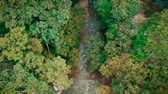 Scenic aerial view of river through forest Dostupné videozáznamy