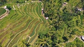 letecký pohled : Aerial view of Rice Terrace field taken in Tegallalang, Bali Indonesia