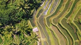 Aerial view of Rice Terrace field taken in Tegallalang, Bali Indonesia