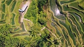 plantation : Aerial view of Rice Terrace field taken in Tegallalang, Bali Indonesia