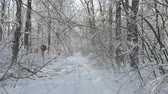 mysterious : Walking on a hidden path in the snow covered forest in winter Stock Footage
