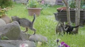 fofinho : Sweet baby cats enjoying a summer day and nature playing on grass