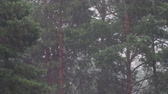 umidade : Drops of summer rain falling down on the background of trees and pines. Vídeos
