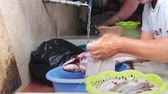 gutting : Gut Fish. Cleans Fish. Rinse fish Water from the Tap