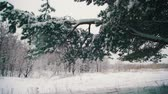 jemioła : Snow Falling from the Snow-Covered Christmas Tree Branches in Winter Day. Slow Motion Wideo