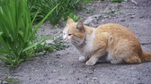 abandoned alley : Red Homeless Cat on the Street in the Park. Slow Motion Stock Footage