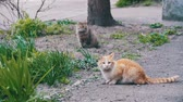 abandoned alley : Two Red and Gray Homeless Cats on the Street in the Park. Slow Motion