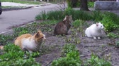 abandoned alley : Three Homeless Cats on the Street in the Park Stock Footage