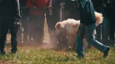 paw : Dog Fights Show. Crowd of People Watching Violent Battle Between Bloody Dogs in Slow Motion Stock Footage