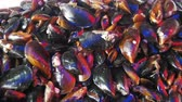 fishmarket : Fresh Seafood Mussels on the Counter of the Fish Store
