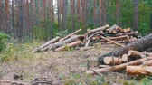 entrar : Cut Logs are Stacked in a Forest