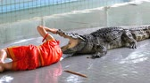 empolgante : Man puts his head in crocodile jaws. Pattaya Crocodile Farm. Thailand
