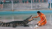aligátor : Man puts his hand in the mouth of a crocodile. Pattaya Crocodile Farm. Thailand