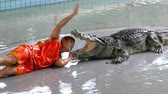 carnívoro : Man thrusts his head into the mouth of the crocodile. Pattaya Crocodile Farm. Thailand Vídeos