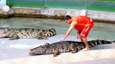 fascinante : Crocodile show. Animal trainer and crocodiles in the arena. Thailand. Asia