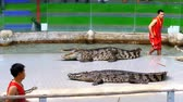 crocodilo : Crocodile show. Animal trainer and crocodiles in the arena. Thailand. Asia