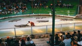 herectví : Crocodile show. Animal trainer and crocodiles in the arena. Thailand. Asia